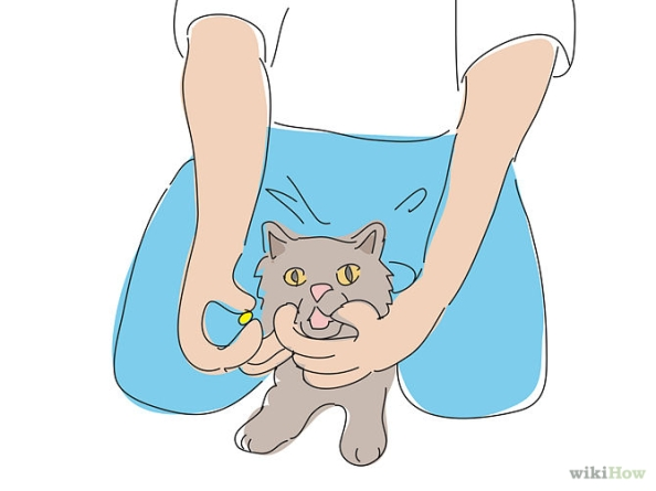 670px-Give-a-Cat-a-Pill-Step-1