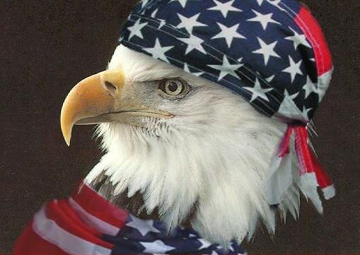bald-eagle-jingoism